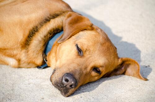 meticcio che dorme al sole