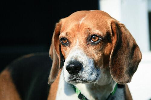 8 razze canine europee da non perdere
