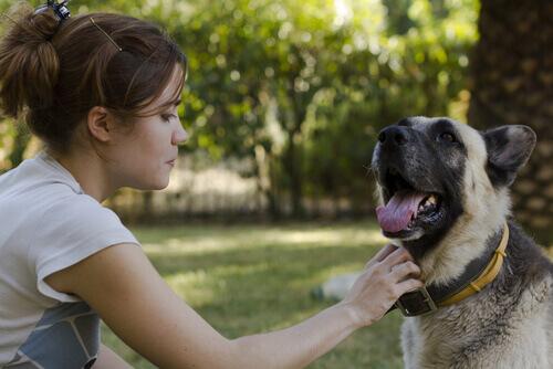 Animali e tecnologia: ecco lo smartphone per cani