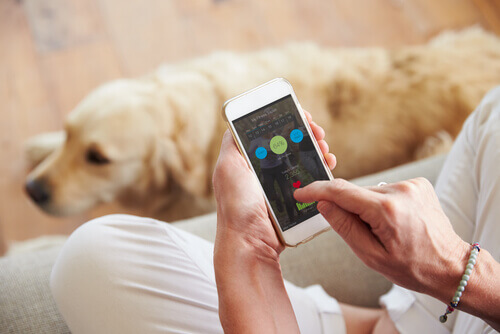 padrone che usa lo smartphone per cani