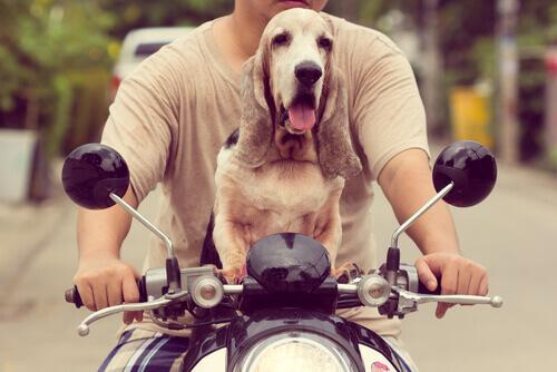 Come viaggiare in moto con il cane?