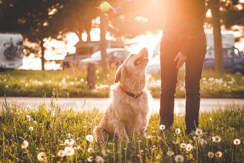 padrone mostra pallina al cane nel parco