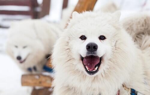 Parlare con il cane, per Amazon tra 10 anni sarà possibile