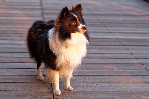 Come scoprire che tipo di personalità ha un cane?