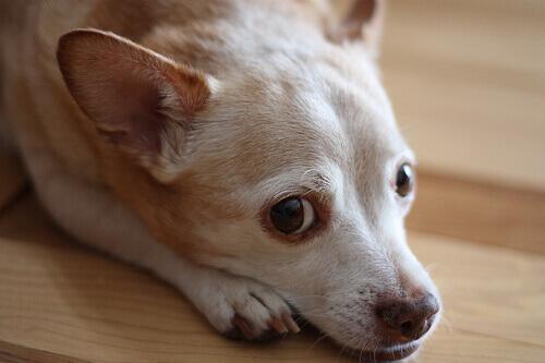 Esistono test allergologici per cani?