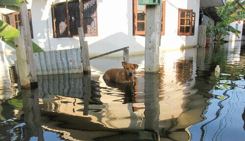 Alluvione: prendersi cura del proprio animale domestico