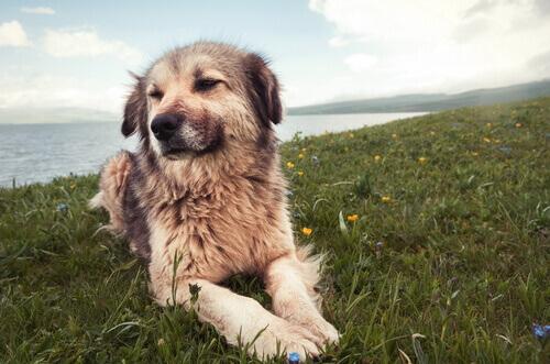 7 cause di problemi di comportamento nei cani