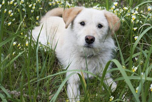 Terza palpebra nei cani: di cosa si tratta?