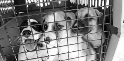 Regalare una nuova vita ai cani abbandonati