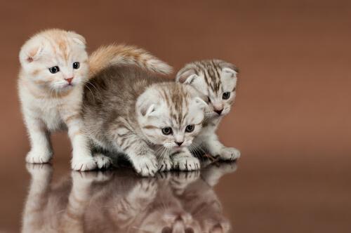tre cucciolo di gatto