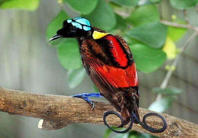 6 uccelli impressionanti