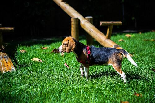Quali sono le razze di cani più popolari