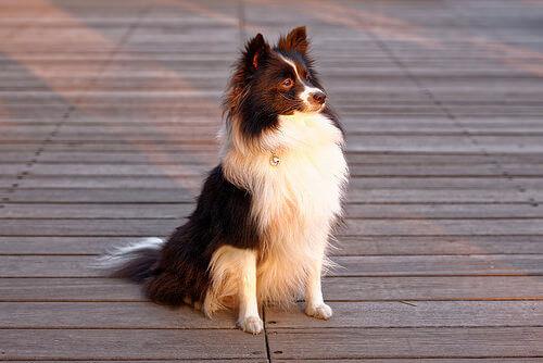 La forfora nei cani: cause, cura e rimedi fai da te