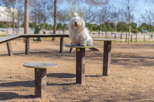 un cagnolino gioca in un parco sterrato