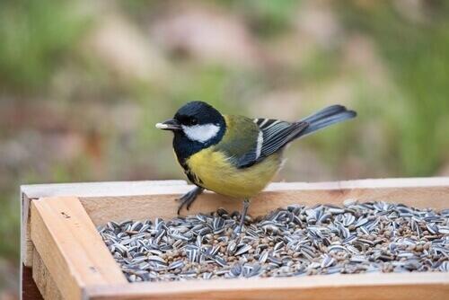 Conosciamo i cibi velenosi per gli uccelli