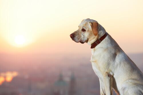 Serve offrire una ricompensa per un cane smarrito?