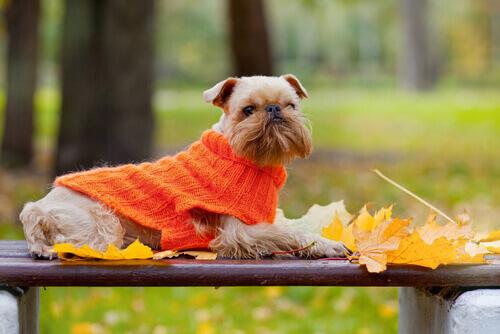 Cane con golfino arancione al parco