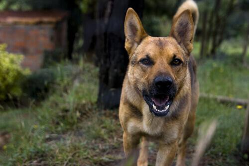 La rabbia nei cani: cos'è, come curarla e prevenirla
