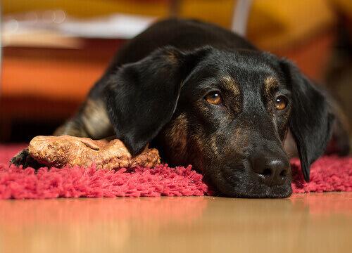 un cane nero sdraiato triste