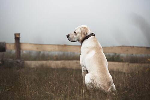 un cane solo e triste