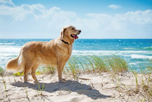 Le migliori spiagge per cani in Spagna e Portogallo
