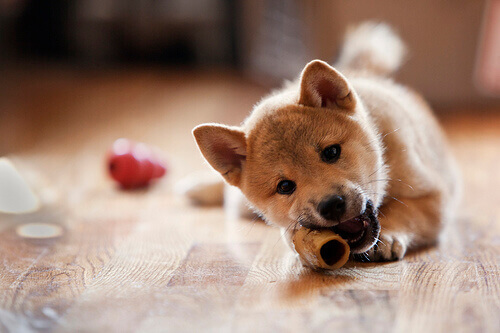 I rischi di una cattiva alimentazione in cani e gatti