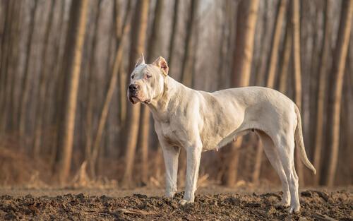 Le 8 razze di cani americani più popolari