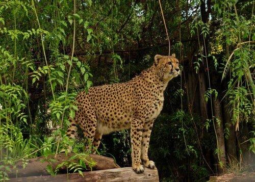 Lo zoo di Buenos Aires diventerà un ecoparco