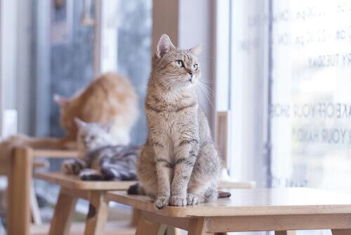 un gruppo di gattini sui tavoli