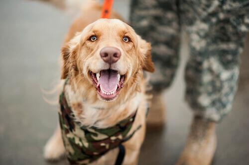 Ecco i cani addestrati per la ricerca di persone