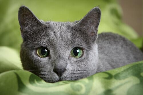 blu di russia su lenzuola verdi