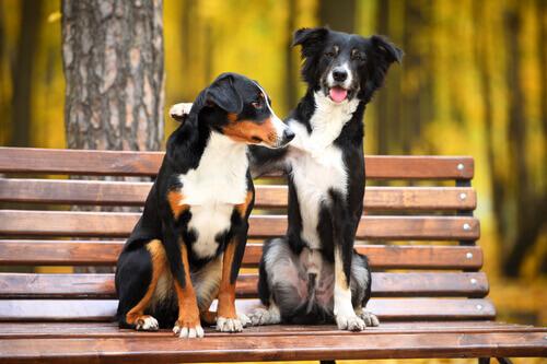 una coppia di cani seduti su una panchina