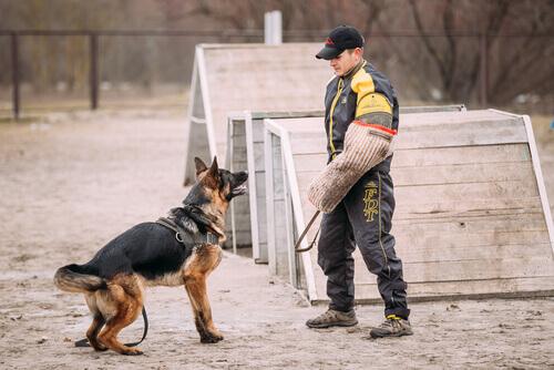 Addestratore con un cane lupo all'aperto