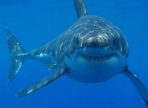 I 10 animali più grandi del mondo