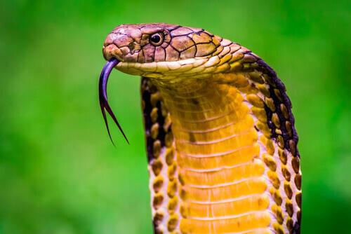 Scoprite i 10 animali più velenosi al mondo