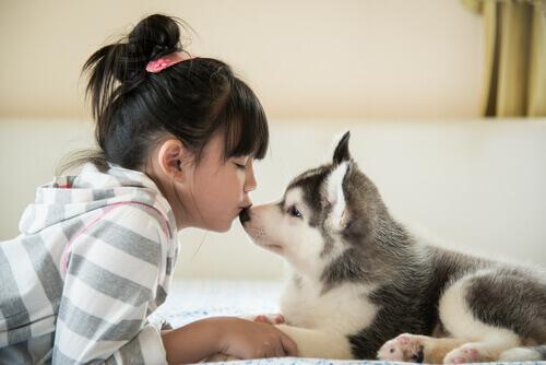 Come allevare un cucciolo dentro casa