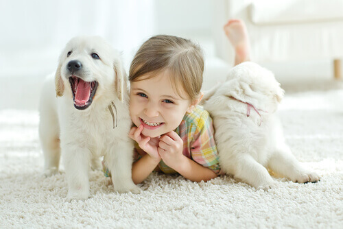 Mio figlio vuole un animale per il compleanno: cosa faccio?
