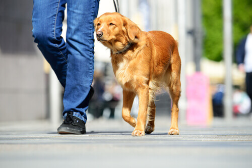 Cane a spasso con il padrone per strada
