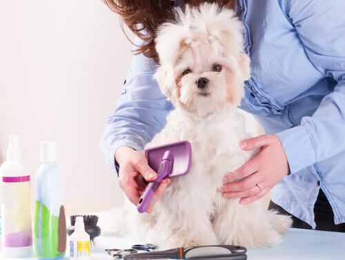 cane bianco che viene spazzolato