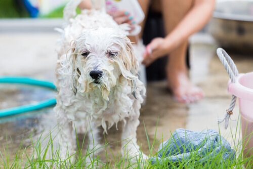 Il momento della toilette: perché i cani lo odiano?