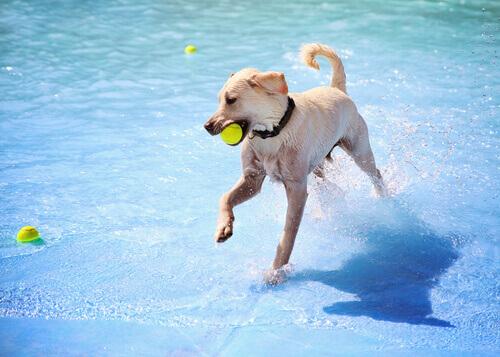 cane che gioca in piscina con palla