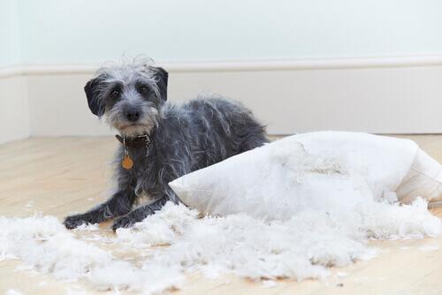6 problemi comportamentali nei cani