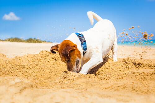 cane che scava in spiaggia