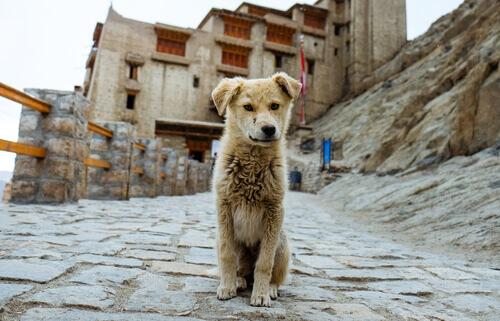 cane che si è perso per strada