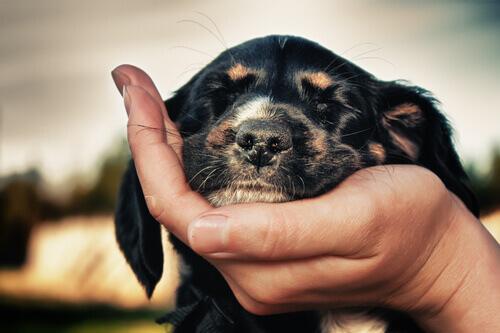 cane con occhi chiusi appoggiato su mano del padrone