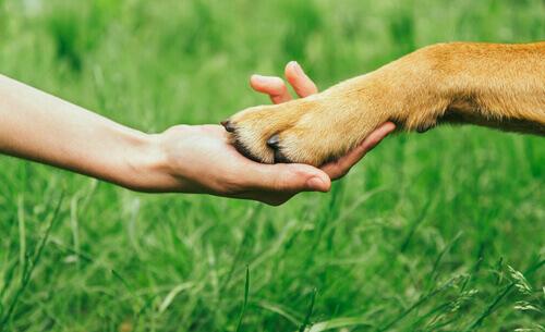 Come ottenere il rispetto del cane?