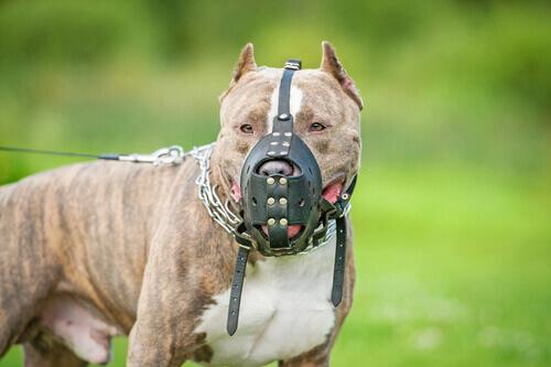 Cosa si intende per cane potenzialmente pericoloso?