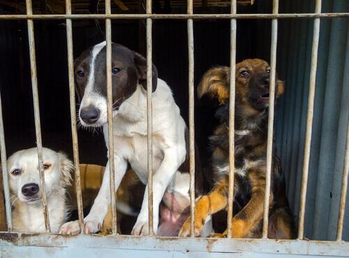 cani in gabbia al canile