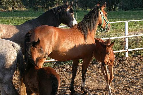 cavalli e puledri stanno insieme in un recinto