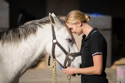 In che modo calmare un cavallo spaventato?